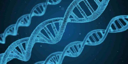 La epigenética por Carlos Roma