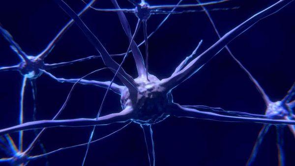 El ayuno y el cerebro